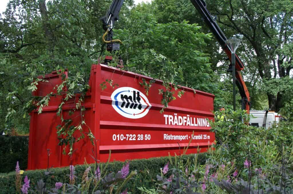 Anlita MLT om du behöver kapa träd